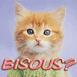 """Chaton roux mignon """"Bisous?"""""""