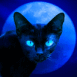 Chat mystérieux au clair de lune