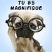 """Chiot à lunettes """"Tu es magnifique"""""""