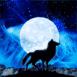 Loup qui hurle au clair de lune