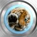 Bébé tigre coincé dans l'écran