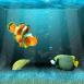 Un aquarium dans votre �cran