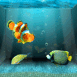 Un aquarium dans votre écran