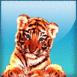 Bébé tigre aux yeux bleus