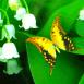 Un papillon dans du muguet