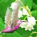 Petit oiseau dans du muguet