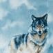 Loup au regard mena�ant