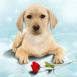 Chiot mignon offrant une rose