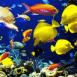 Aquarium: récif corallien