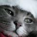 Petit chat de Noël