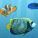 Des poissons nagent dans votre écran