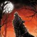 Loup hurlant à la lune rouge