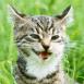 Chat tout fou en pleine nature