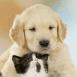 Bébé labrador et chaton amoureux