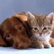 Chien et chat mignons à croquer