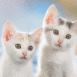 Couple de chatons blanc aux yeux verts