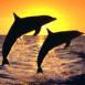Deux dauphins sous un superbe coucher de soleil