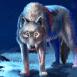 Loup au regard perçant