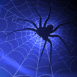 Araignée tapie dans sa toile