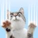 Chat qui griffe l'écran