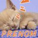 Chaton faisant la sieste