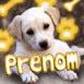 Chiot Labrador et motifs fluo