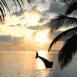 Dauphin avec plage au cr�puscule