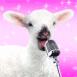 Agneau chantant