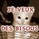 """Chaton blanc dans son panier """"Je veux des bisous"""""""