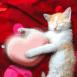 Chaton avec un coeur