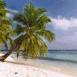 Plage et palmiers (Maldives)