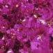 Fleurs violettes (Maroc)