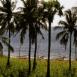 Mer, palmiers et bateaux (Bali)
