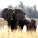 Éléphante et son éléphanteau