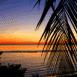 Mer au crepuscule derrière une branche de palmier (Maldives)