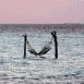 Hamac en pleine mer