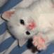 Chaton blanc sur le dos, pattes en l'air