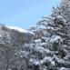 Sapin et montagne au loin