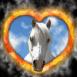 Cheval blanc dans coeur en feu