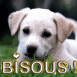 "Chiot Labrador ""Bisous!"""