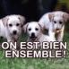"""Chiots Labrador """"On est bien ensemble"""""""