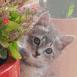 Chaton caché derrière des fleurs