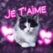 """Chat et coeurs fluo """"je t'aime"""""""