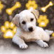 Chiot labrador et empreintes fluo jaune