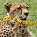 """Famille de gu�pards """"Envie de c�lins"""""""