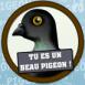 """Tu es un beau pigeon"""