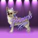 Princesse chihuahua