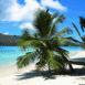 Palmier sur la plage
